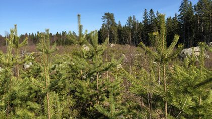 6f3d34fb Ett lönsamt skogsbruk med välmående viltstammar är den gemensamma  målsättningen i den överenskommelse som tecknats mellan företrädare för det  svenska ...
